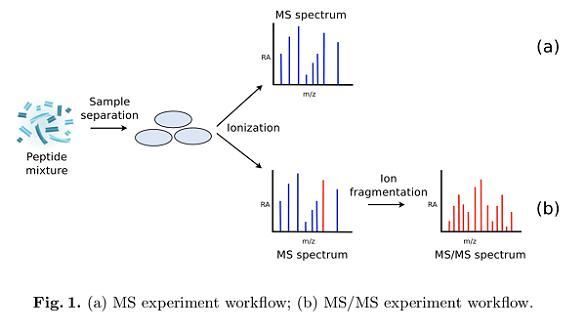 多肽鉴定_质谱分析_百泰派克生物