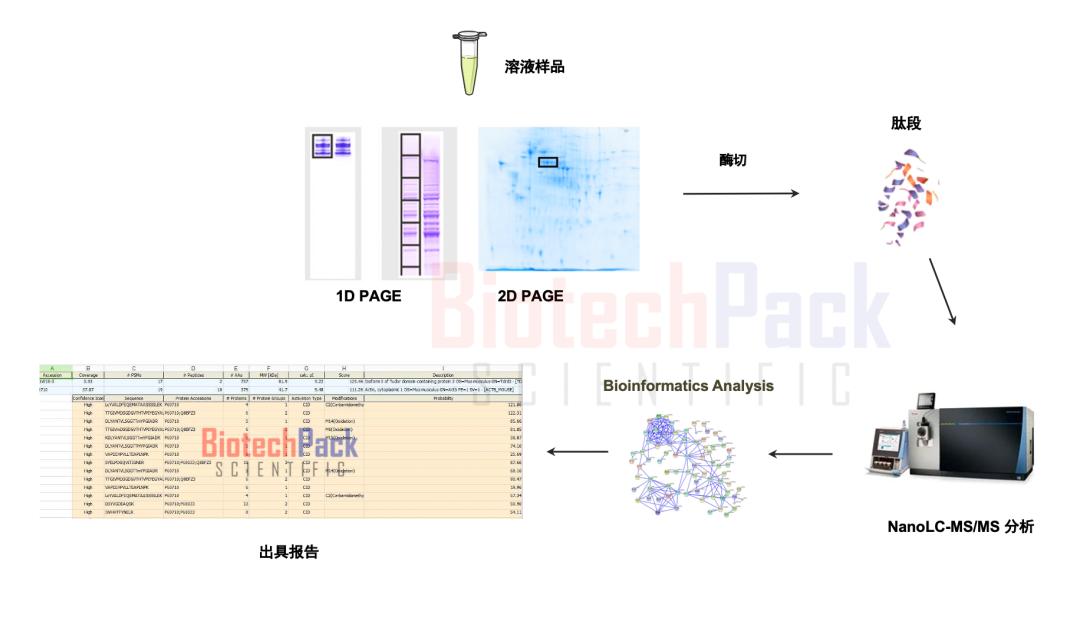 蛋白质质谱鉴定
