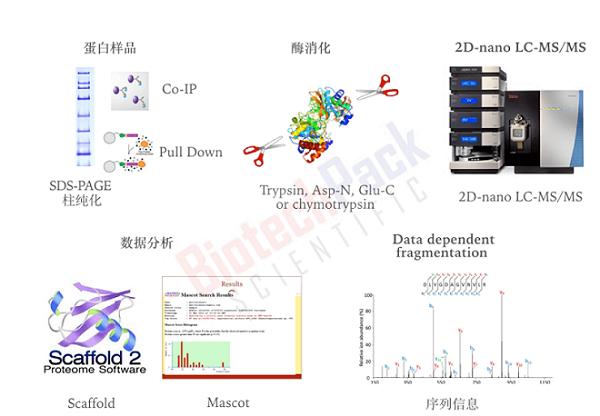 蛋白胶点_胶条_IP样品蛋白鉴定_百泰派克生物