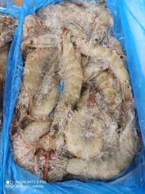 厄瓜多尔白虾南美地区白对虾70-80欧玛莎(水冻)